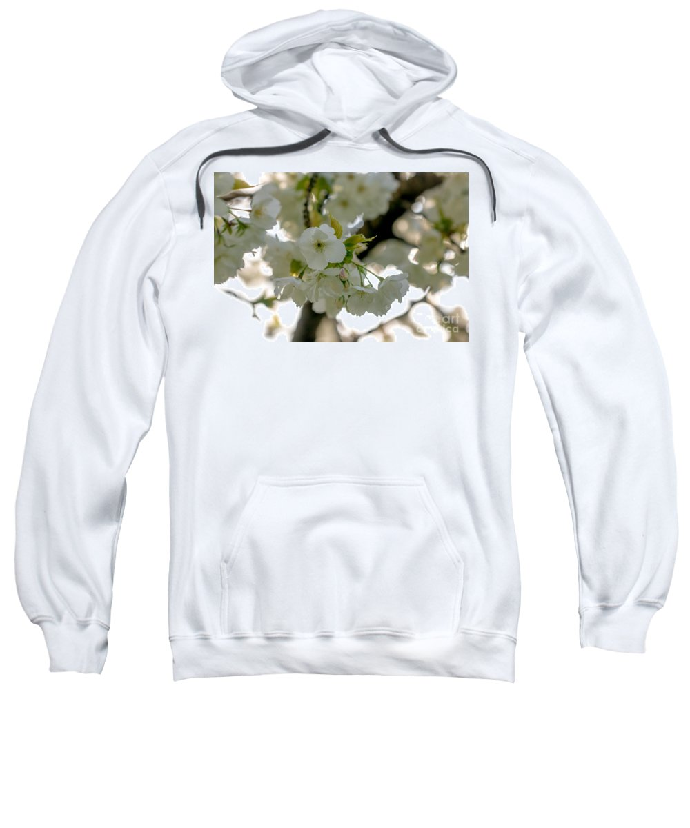 Cherry Blossom Sweatshirt featuring the photograph Cherryblossom Flowers 4 by Marc Daly