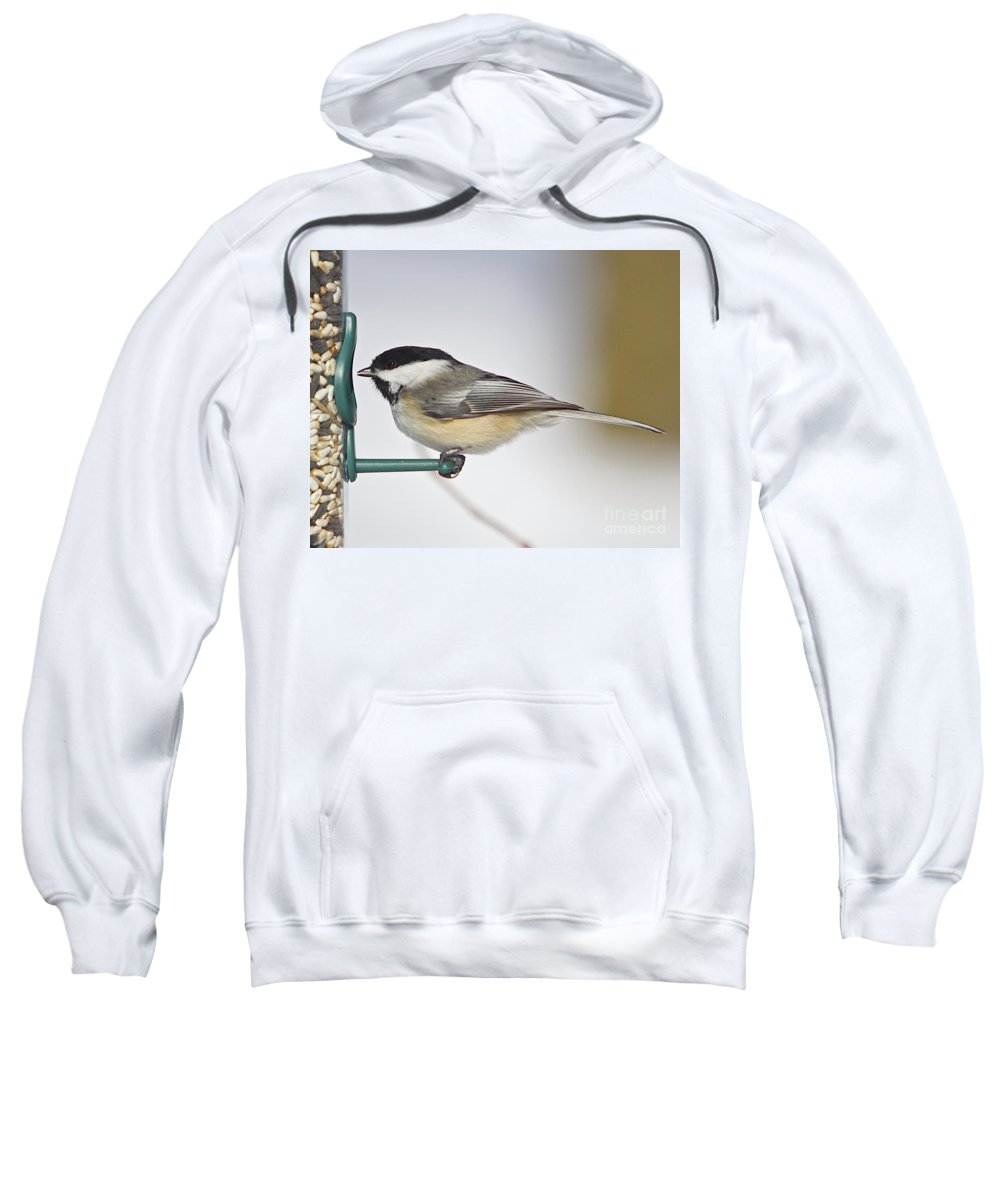 Additional Tags: Sweatshirt featuring the photograph Chickadee-4 by Robert Pearson