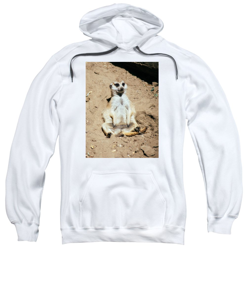 Brow Sweatshirt featuring the photograph Chilling Meerkat by Pati Photography