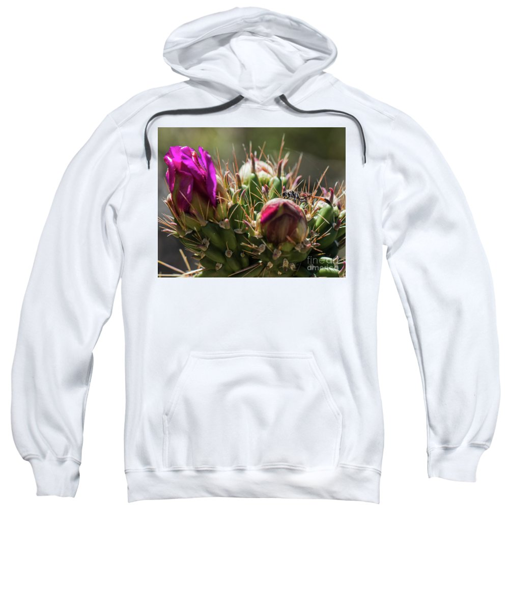 Natanson Sweatshirt featuring the photograph Cholla With Wasp by Steven Natanson