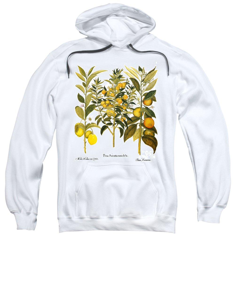 1613 Sweatshirt featuring the photograph Citron And Orange, 1613 by Granger