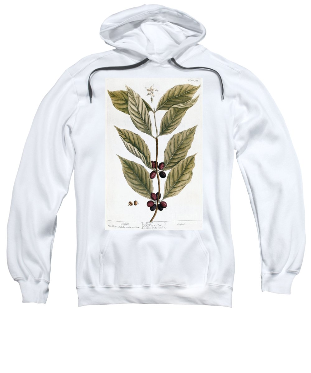 1730s Sweatshirt featuring the photograph Coffee Plant, 1735 by Granger