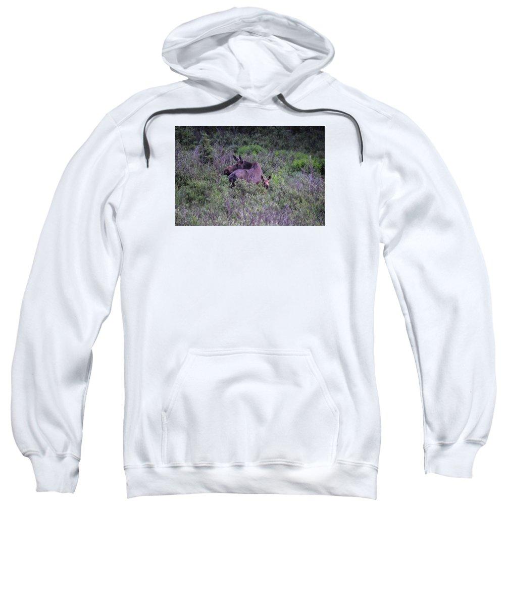 Colorado Sweatshirt featuring the photograph Colorado Moose by Alice Kelsey