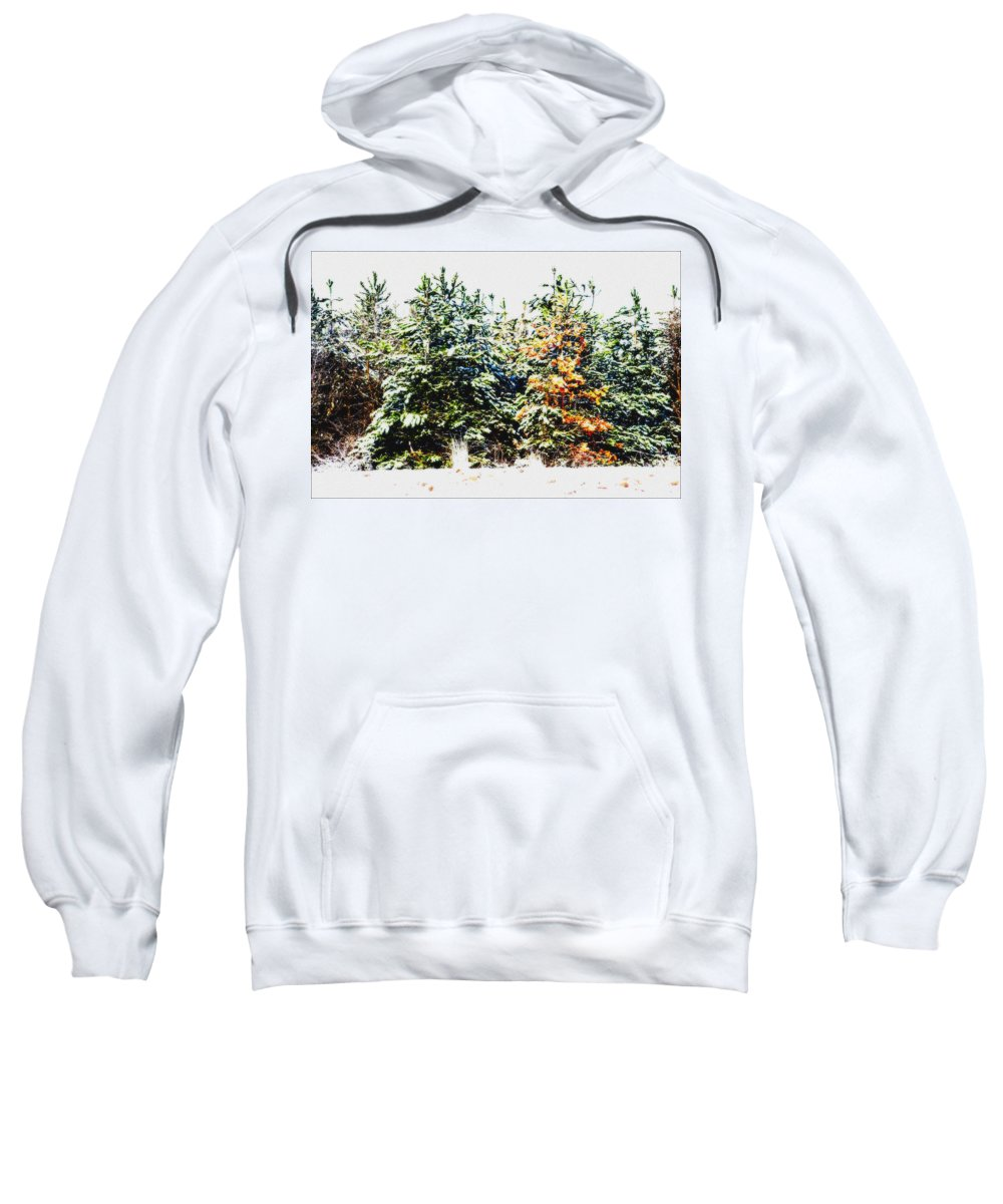 Tree Sweatshirt featuring the photograph Coloured Trees by Cliff Norton
