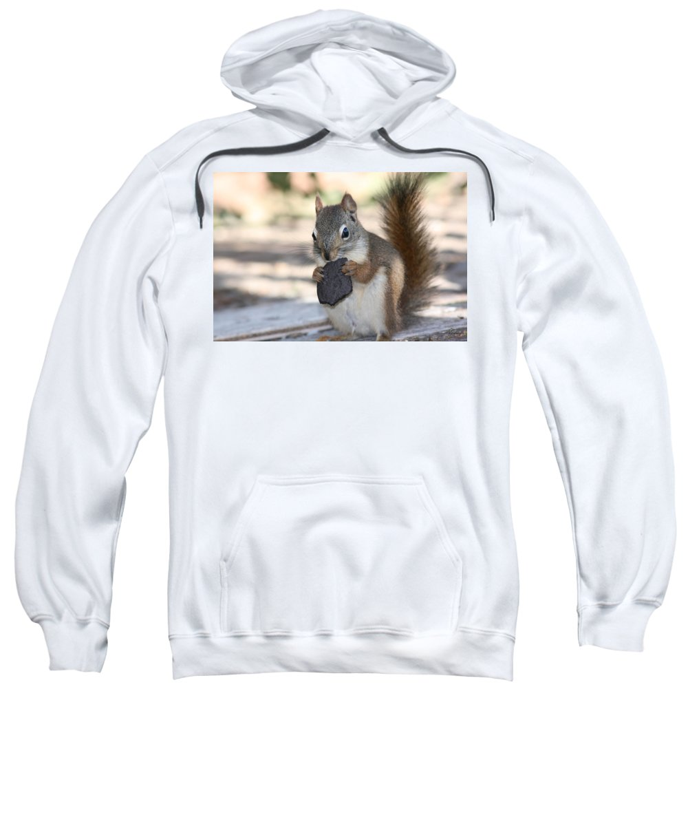 Cookie Squirrell Nature Wild Animal Chocolate Food Camping Outdoors Sweatshirt featuring the photograph Cookie Monster by Andrea Lawrence