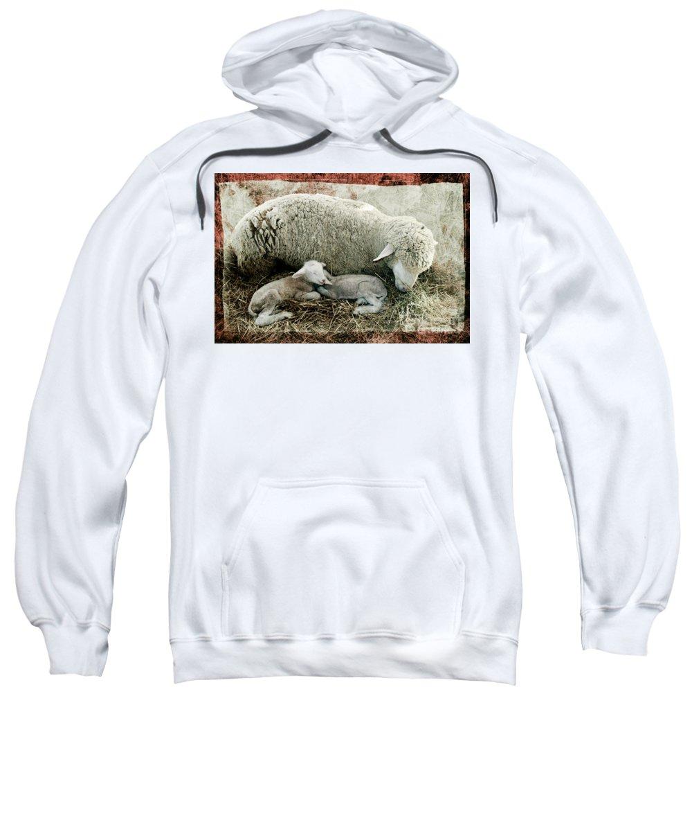Sheep Sweatshirt featuring the photograph Counting Sheep by Sari Sauls