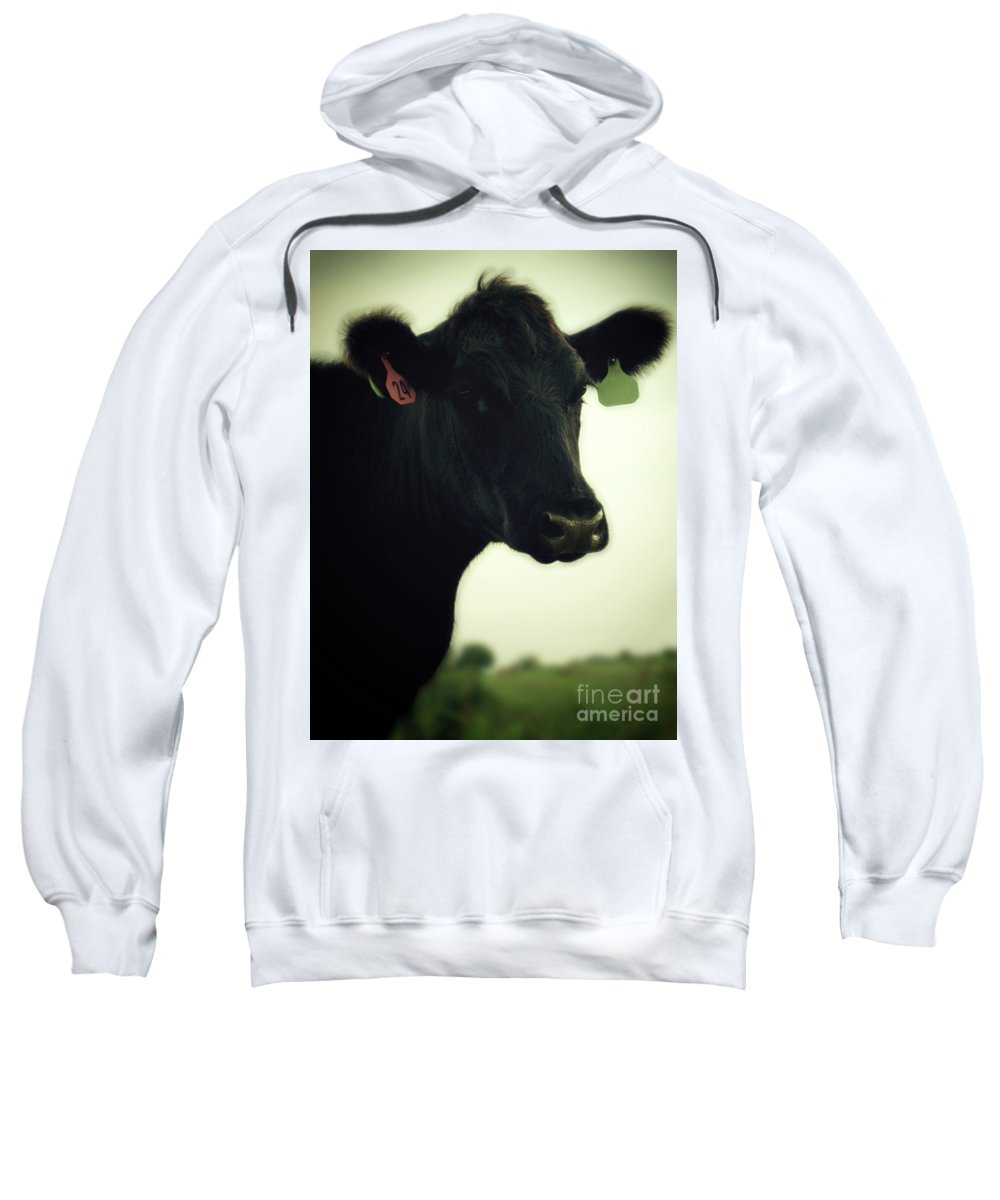 Cow Sweatshirt featuring the photograph Cow In Summer by Penn Patrick