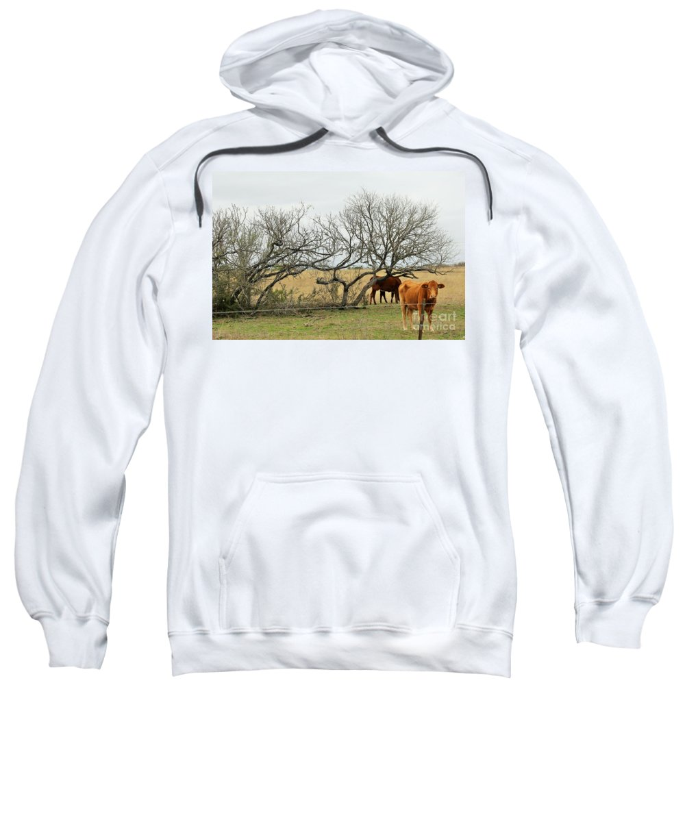 Sweatshirt featuring the photograph Cows 015 by Jeff Downs