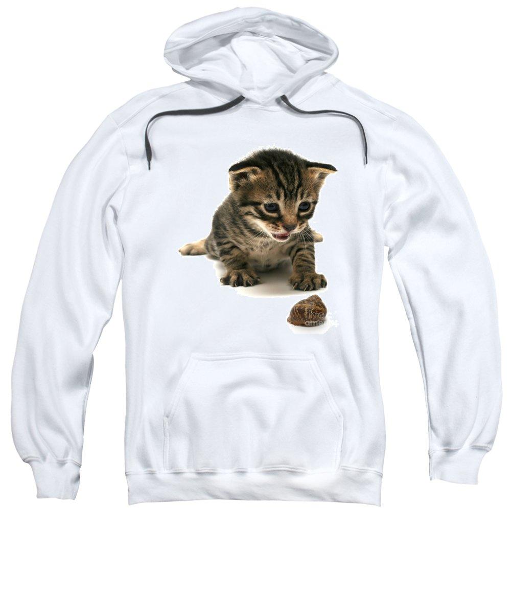 Cat Sweatshirt featuring the photograph Curious Kitten by Yedidya yos mizrachi