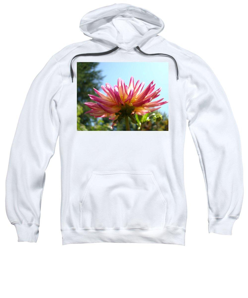 Dahlia Sweatshirt featuring the photograph Dahlia Floral Garden Art Prints Canvas Summer Blue Sky Baslee Troutman by Baslee Troutman