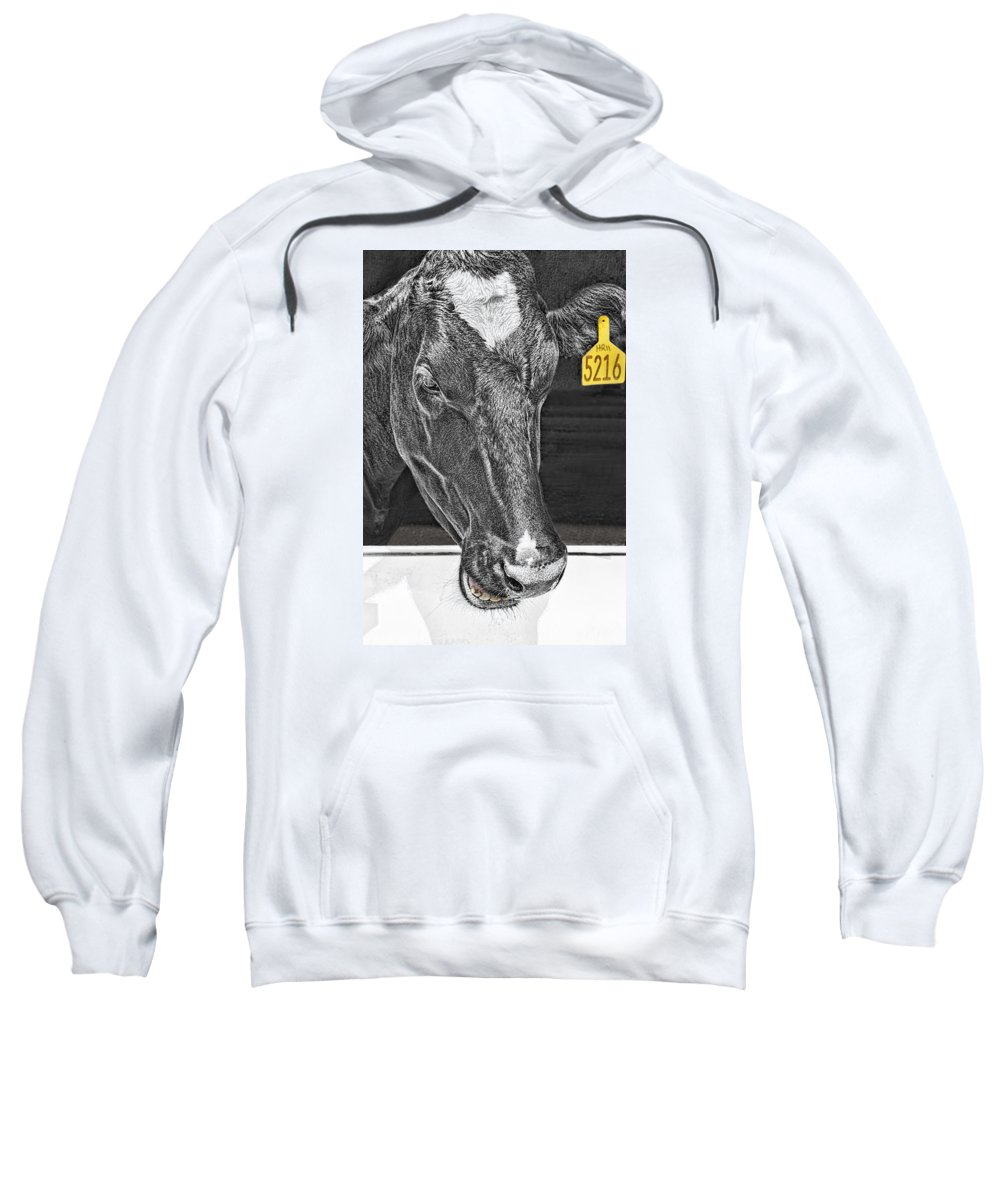 Cow Sweatshirt featuring the photograph Dairy Cow Number 5216 by Mitch Spence