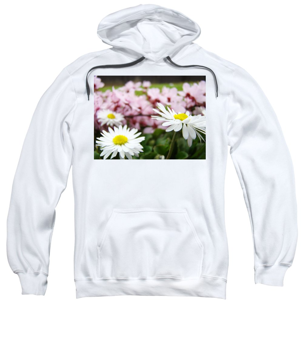 Daisies Sweatshirt featuring the photograph Daisies Flowers Art Prints Spring Flowers Artwork Garden Nature Art by Baslee Troutman