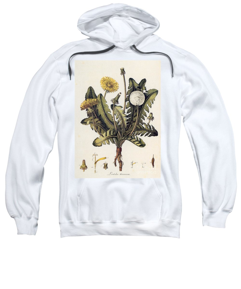 18th Century Sweatshirt featuring the photograph Dandelion by Granger