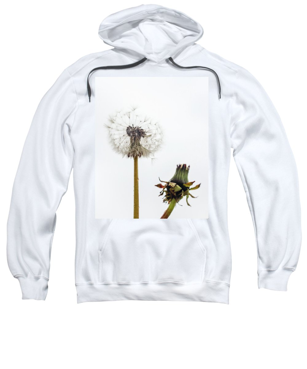Dandelions Sweatshirt featuring the photograph Dandelions by Sigrun Saemundsdottir