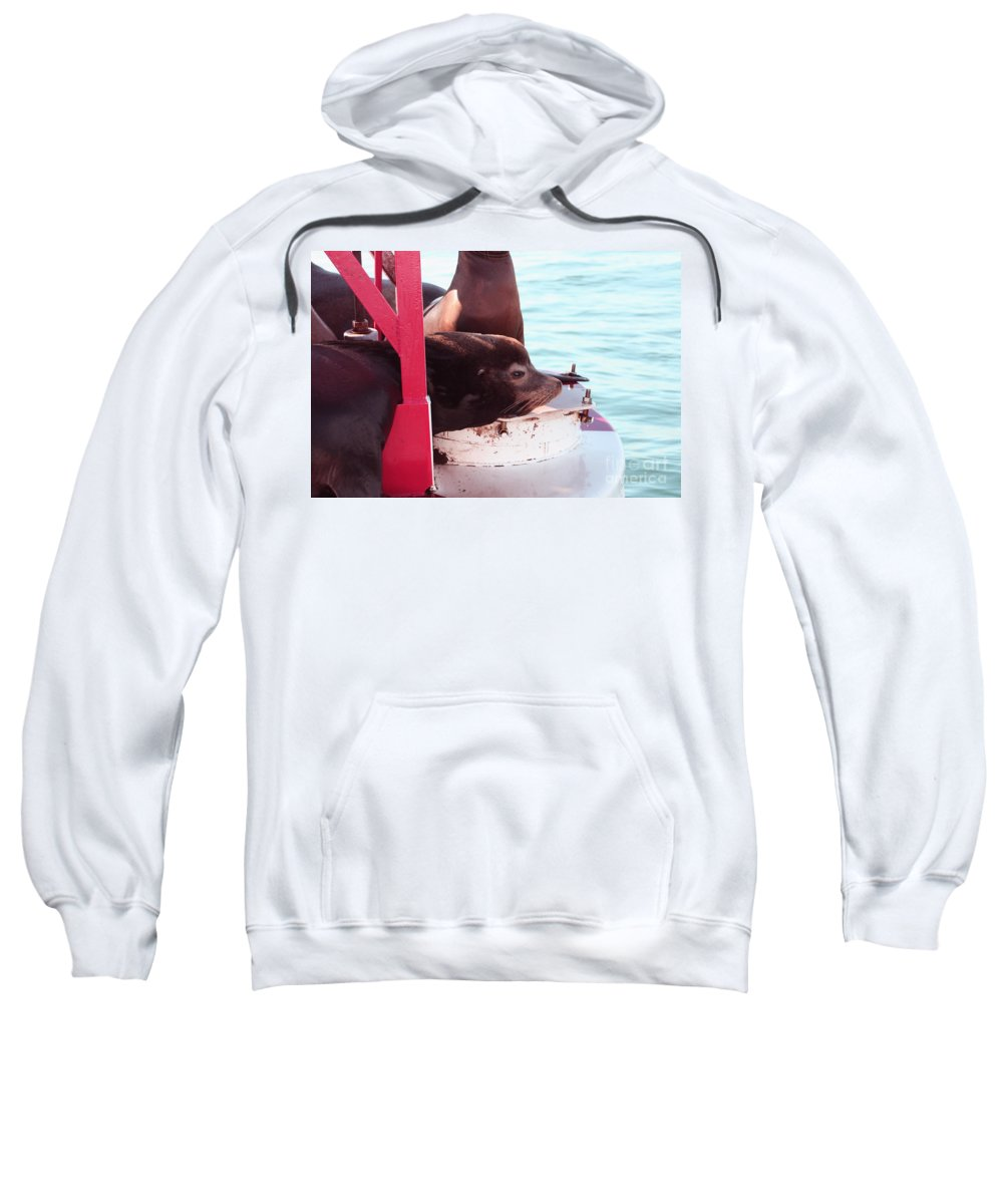Sea Lion Sweatshirt featuring the photograph Day Dreaming by Tommy Anderson