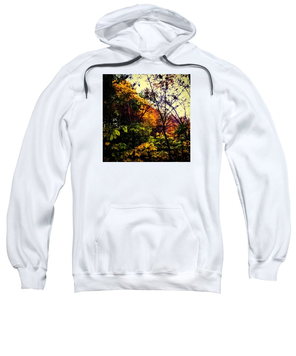Nature Sweatshirt featuring the photograph Day In The Woods by Daniel Baer