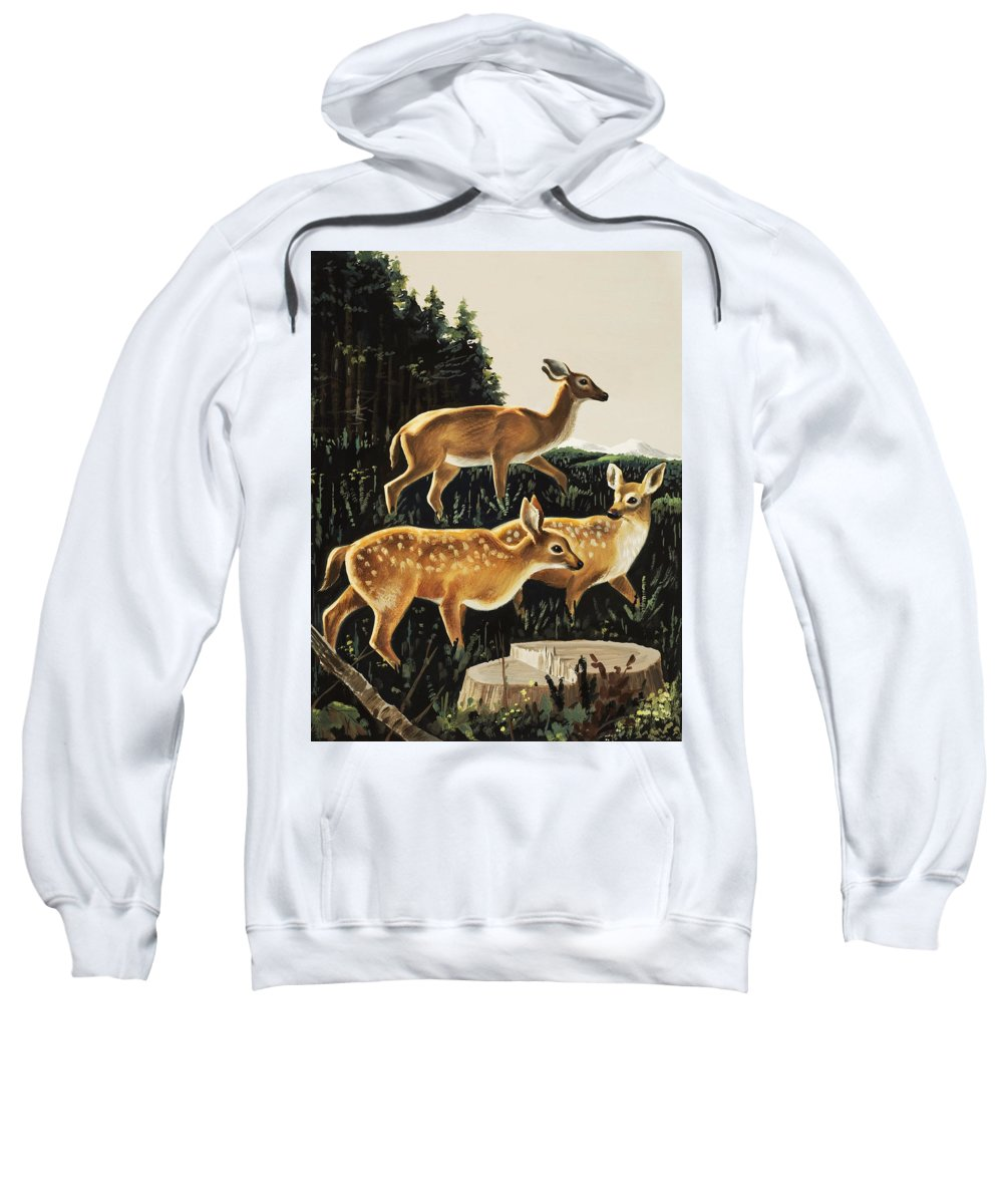 Deer Sweatshirt featuring the painting Deer In Forest Clearing by English School