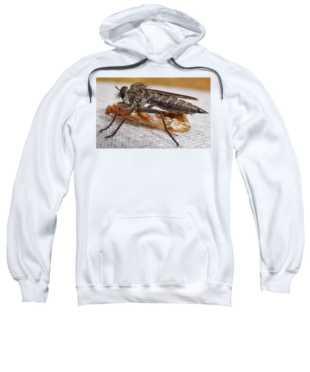 Robber Fly Sweatshirt featuring the photograph Dinner Is Served by Bel Menpes