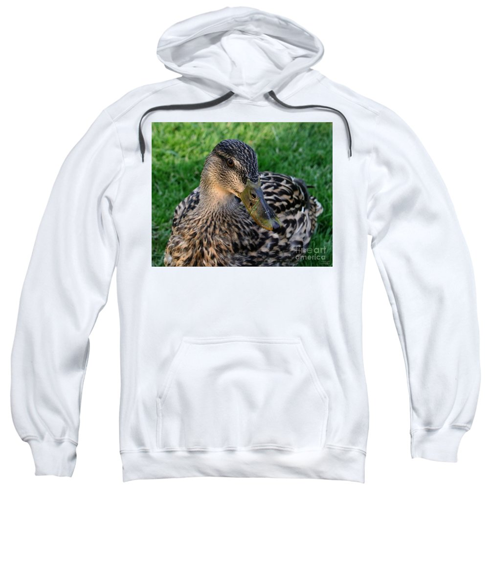 Mallard Sweatshirt featuring the photograph Do You Have A Napkin? by Rebecca Morgan
