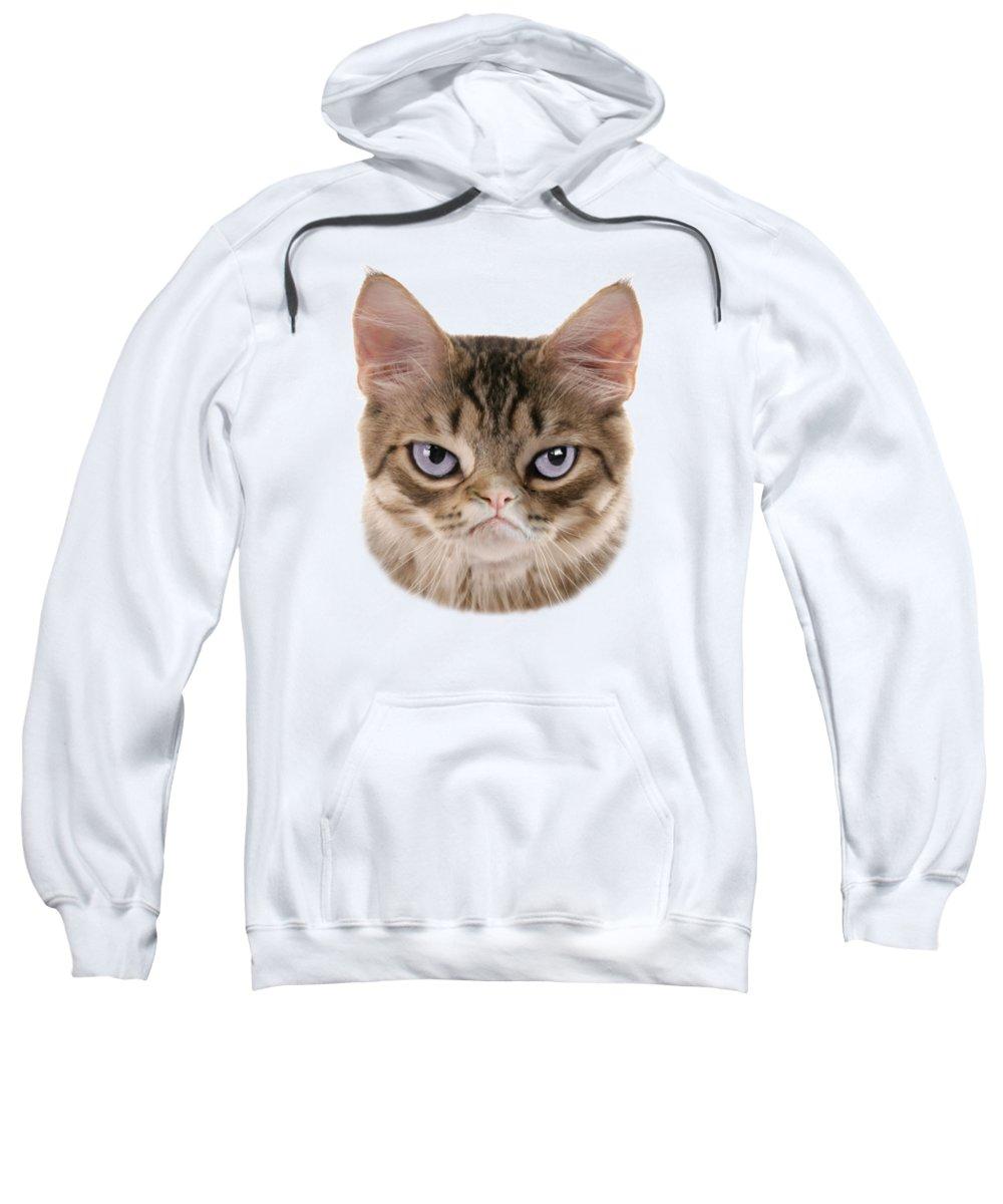Grumpy Kitten Sweatshirt featuring the digital art Kitten T-shirt by Dan Lennard