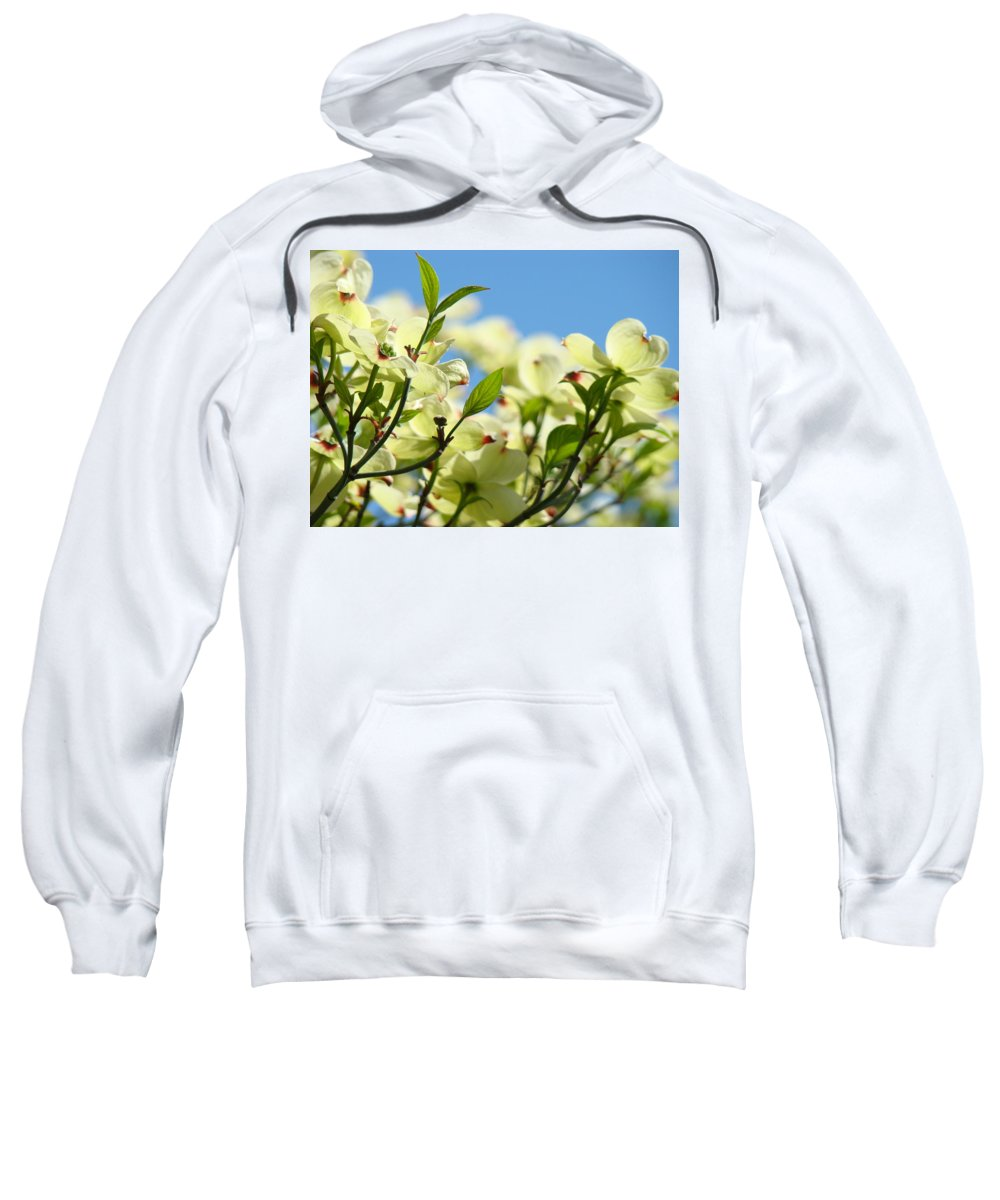 Dogwood Sweatshirt featuring the photograph Dogwood Flowers Art Prints Canvas White Dogwood Tree Blue Sky by Baslee Troutman
