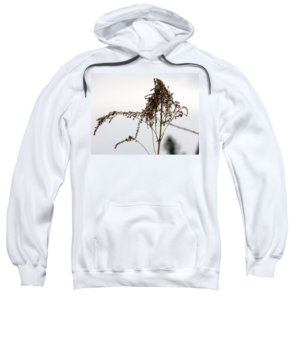 Flowers Sweatshirt featuring the photograph Dried Flower by William Tasker