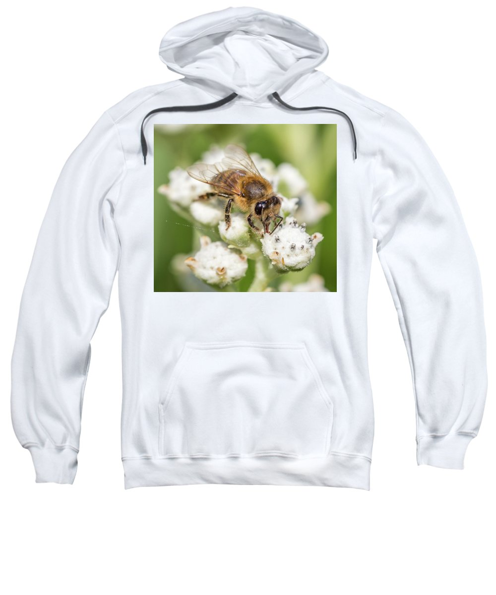 Honey Bee Sweatshirt featuring the photograph Drinking Up The Nectar, Apis Mellifera by Christy Cox
