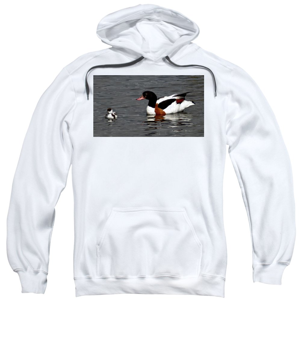 Black Headed Duck Sweatshirt featuring the photograph Duck And Chick by John Hughes