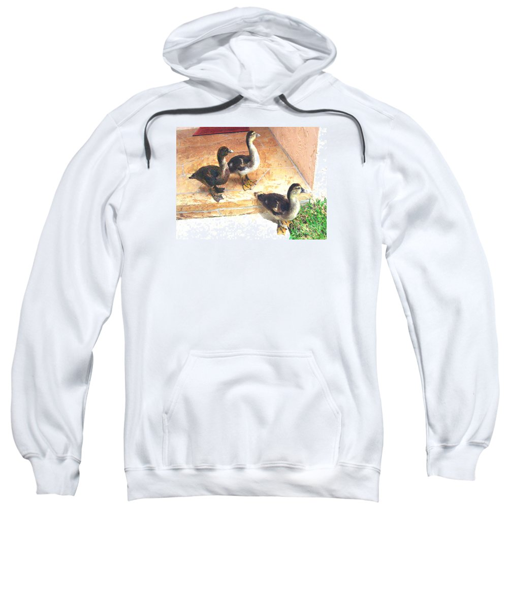 Ducks Sweatshirt featuring the photograph Ducklings Come To Visit by Merton Allen