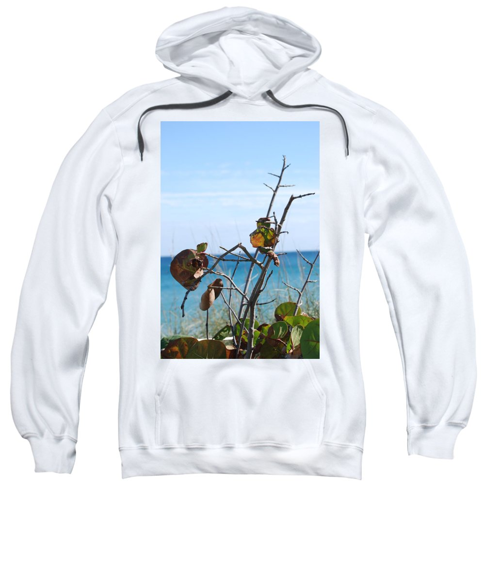 Ocean Sweatshirt featuring the photograph Dune Plants by Rob Hans