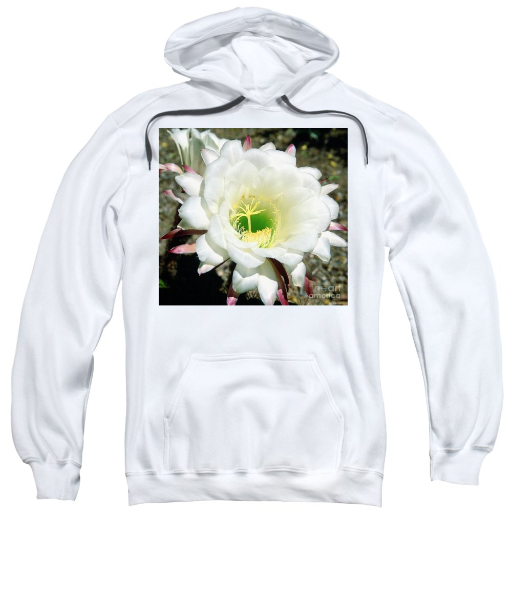 Wildflowers Sweatshirt featuring the photograph Easter Lily Cactus Flower by Kathy McClure