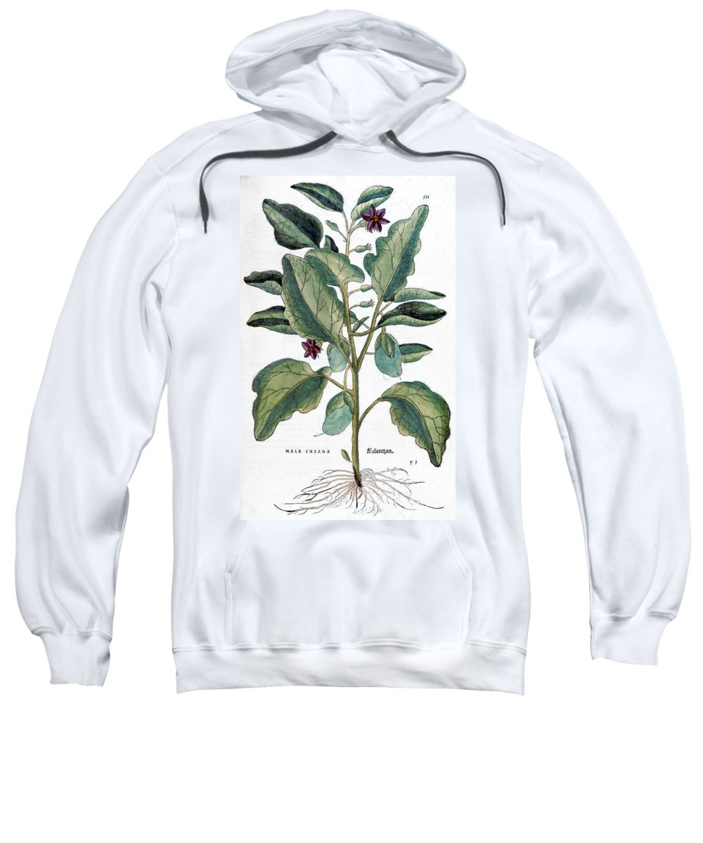 1730s Sweatshirt featuring the photograph Eggplant, 1735 by Granger