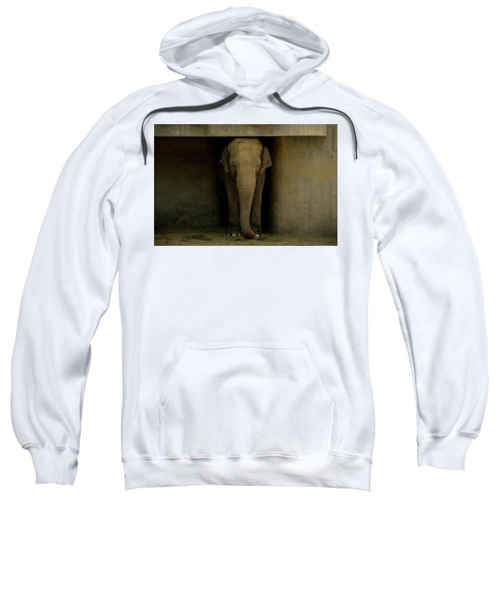 Elephant Sweatshirt featuring the photograph Elephant #1 by Dani Pozo