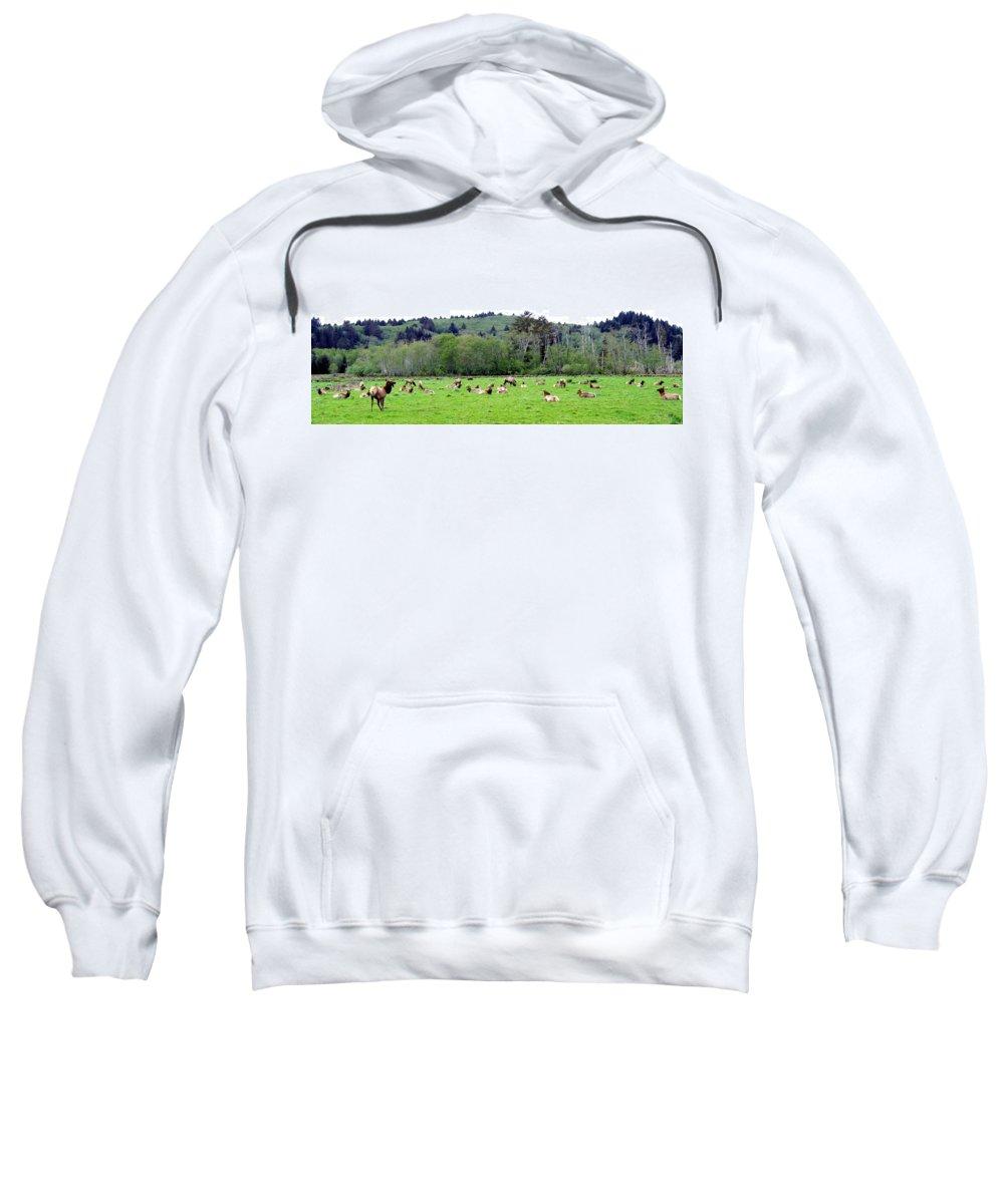 Elk Sweatshirt featuring the photograph Elk Herd by Will Borden