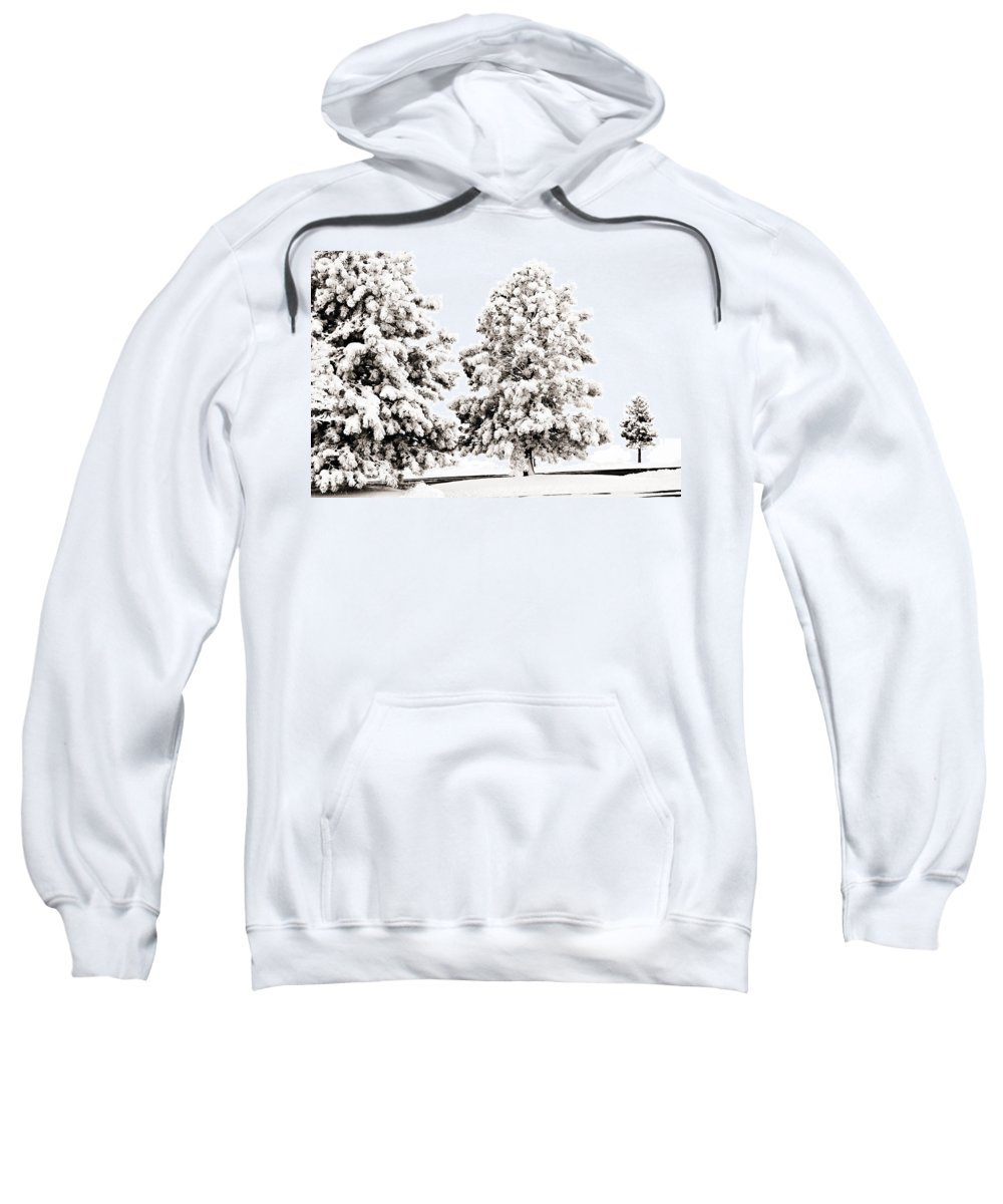 Trees Sweatshirt featuring the photograph Family Of Trees by Marilyn Hunt