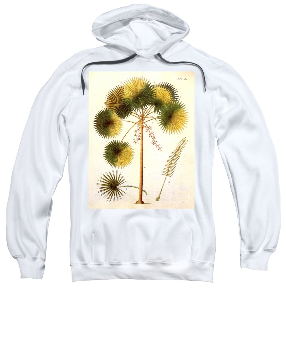 1799 Sweatshirt featuring the photograph Fan Palm by Granger