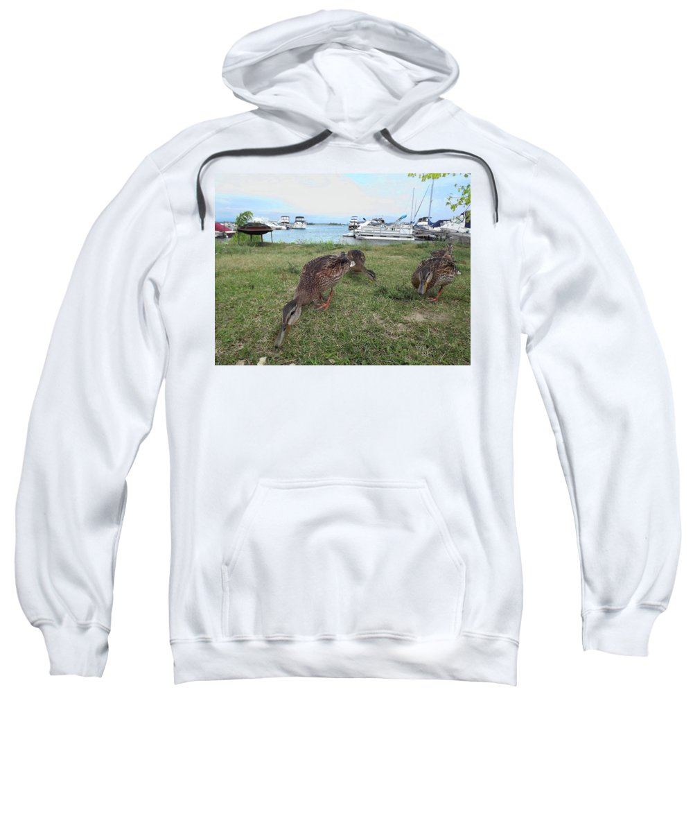 Summer Sweatshirt featuring the photograph Feeding Duck's by Joseph F Safin