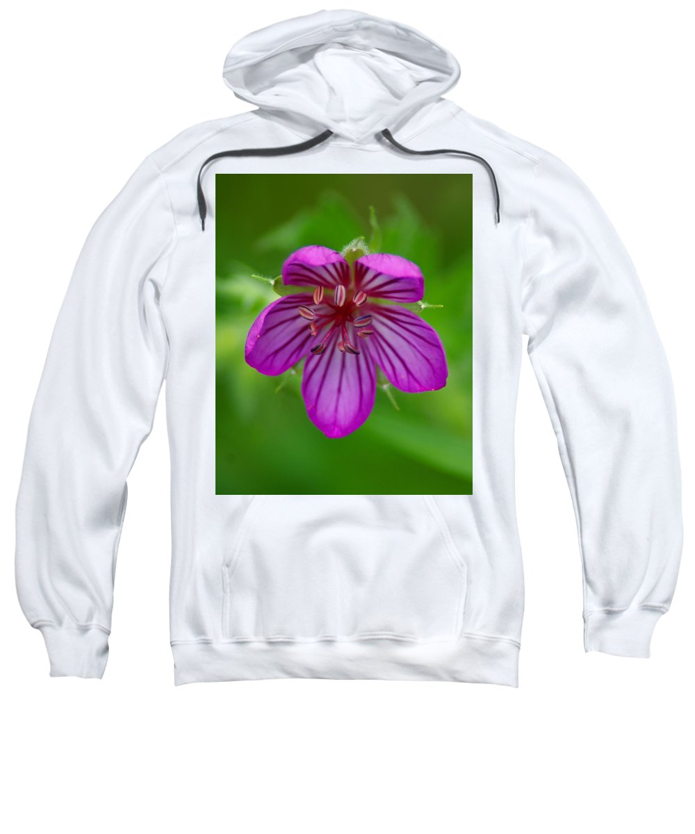 Flowers Sweatshirt featuring the photograph Finding Truth In Nature by Ben Upham III