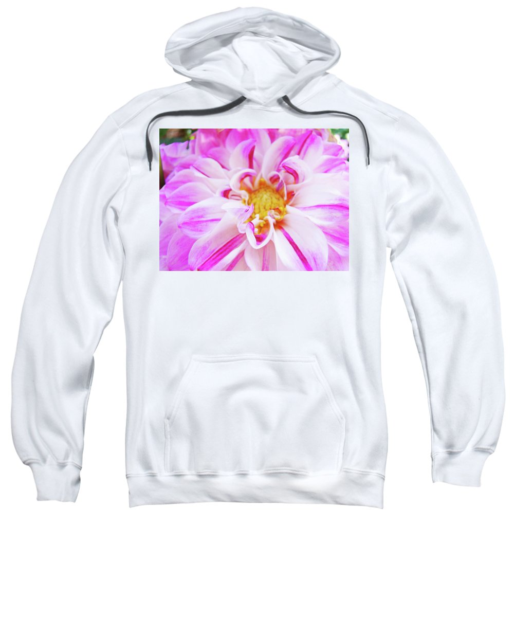 Dahlia Sweatshirt featuring the photograph Floral Art Prints Big Pink White Dahlia Flower Baslee Troutman by Baslee Troutman