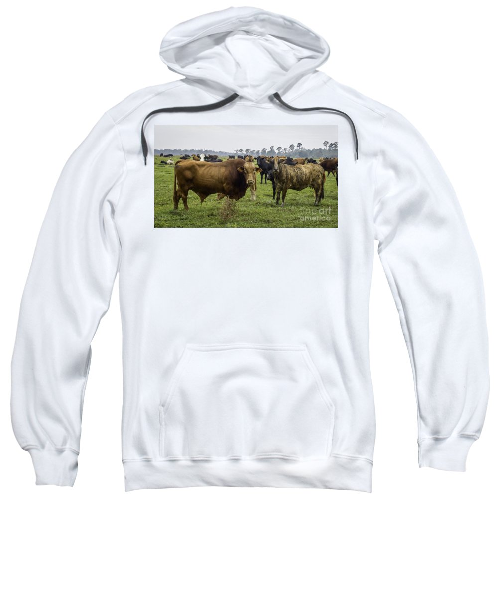 Florida Cracker Cows Sweatshirt featuring the photograph Florida Cracker Cows #2 by Teresa A and Preston S Cole Photography