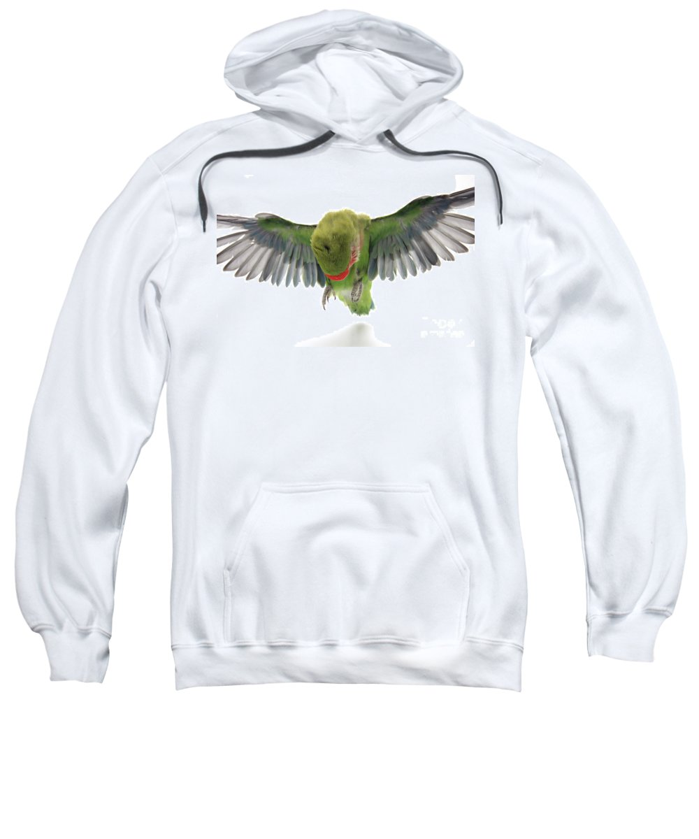 Fly Sweatshirt featuring the photograph Flying Parrot by Yedidya yos mizrachi