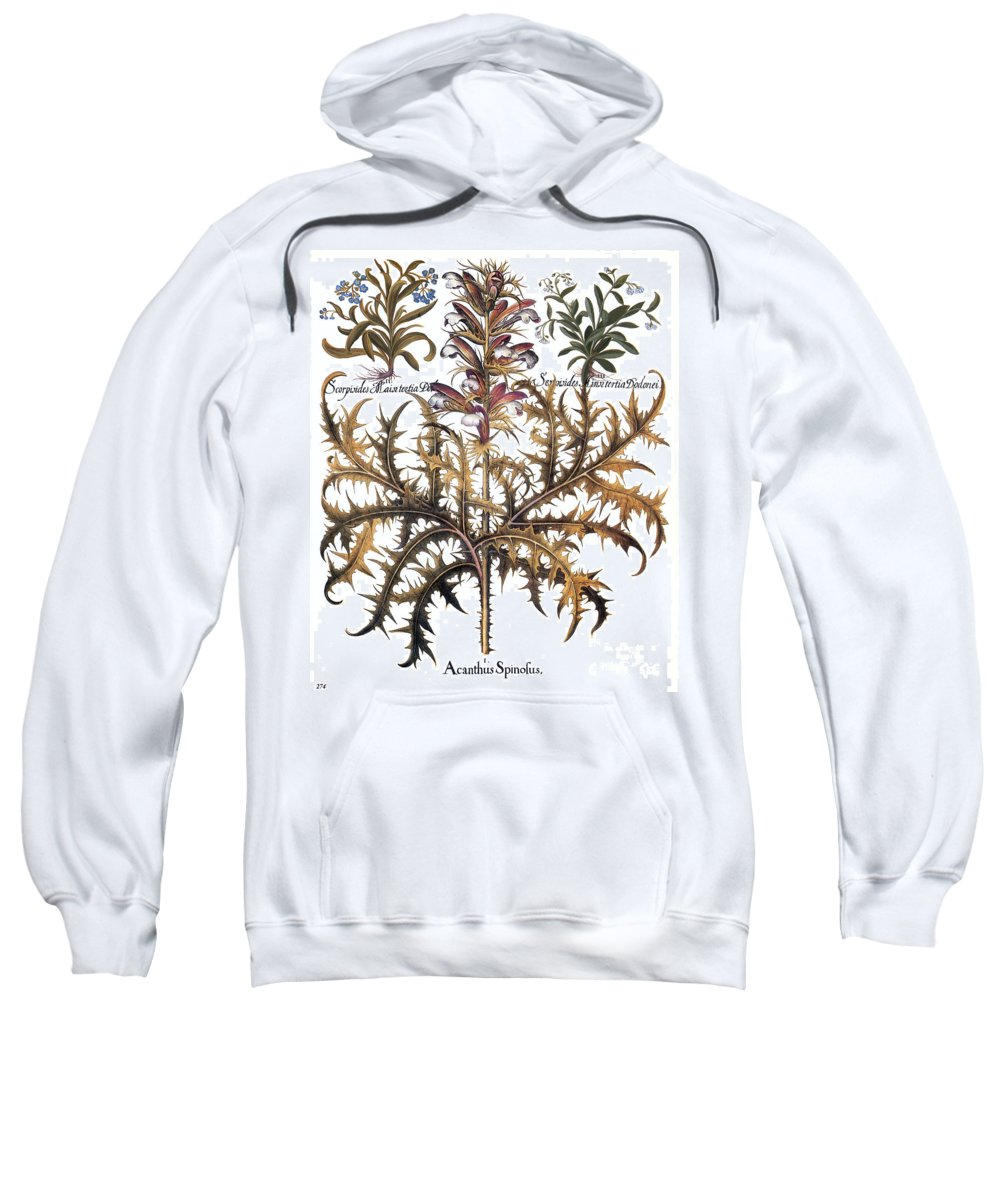 1613 Sweatshirt featuring the photograph Forget-me-not & Acanthus by Granger