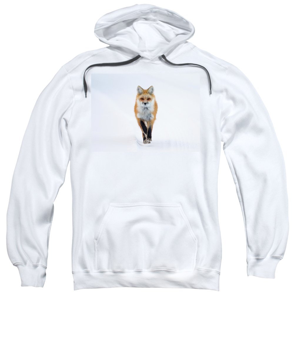 Red Fox Sweatshirt featuring the photograph Fox Trot by Max Waugh