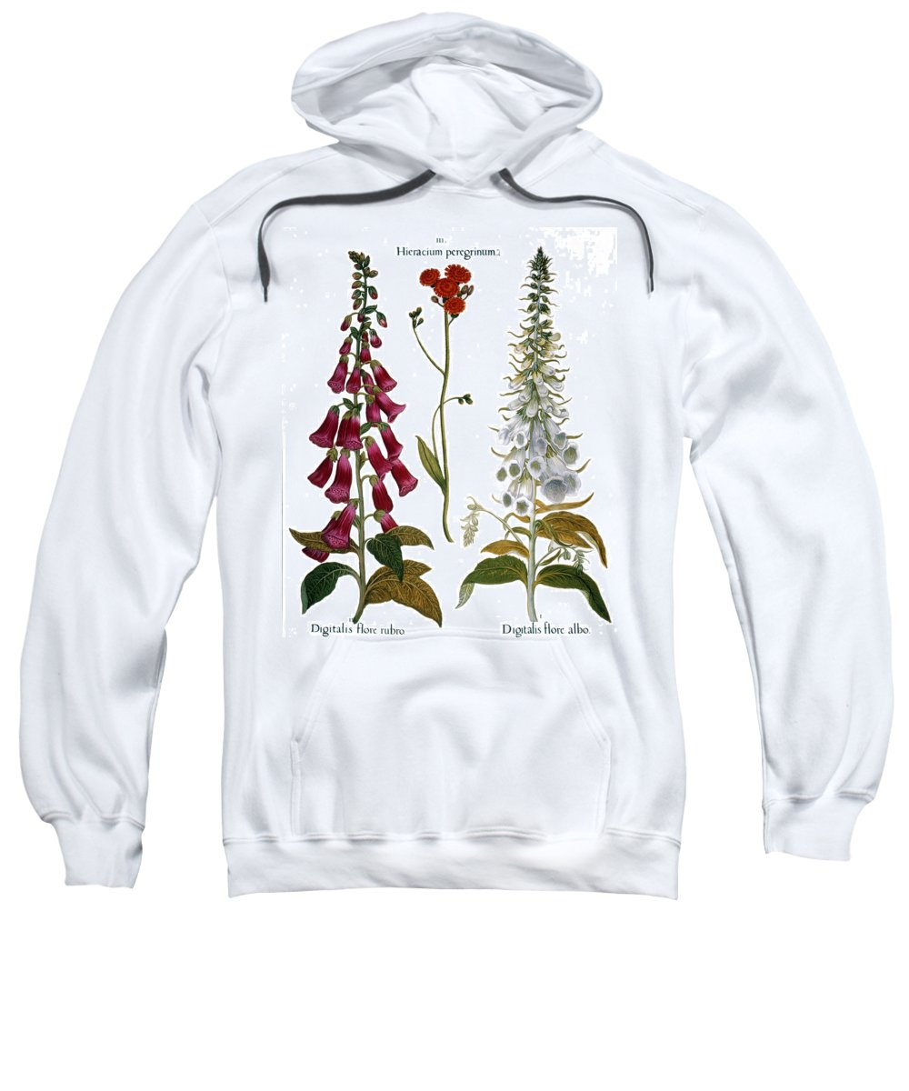 1613 Sweatshirt featuring the photograph Foxglove And Hawkweed by Granger