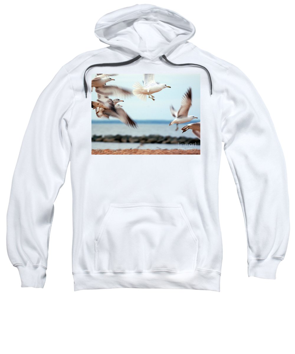 Clay Sweatshirt featuring the photograph Frenzy by Clayton Bruster