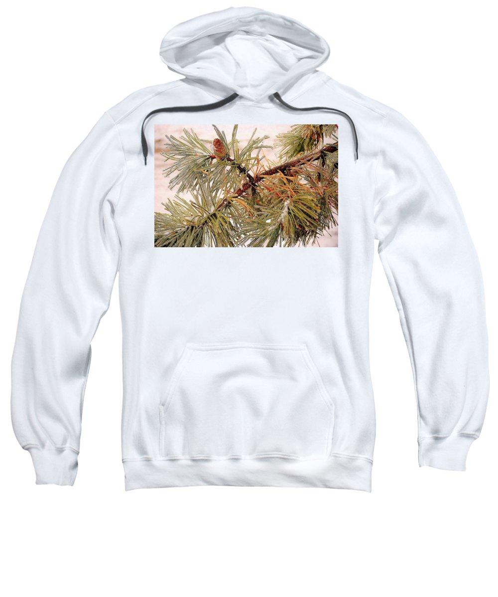 Frozen Sweatshirt featuring the photograph Frozen Pine by Frozen in Time Fine Art Photography