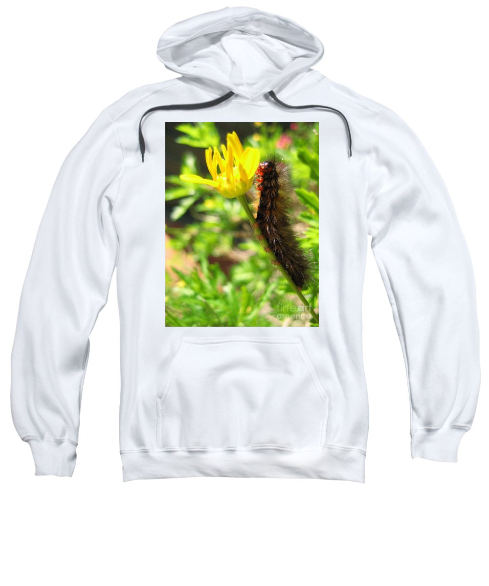 Caterpillar Sweatshirt featuring the photograph Furry Caterpillar On A Yellow Flower by Vanessa Yi-Kai Tsai