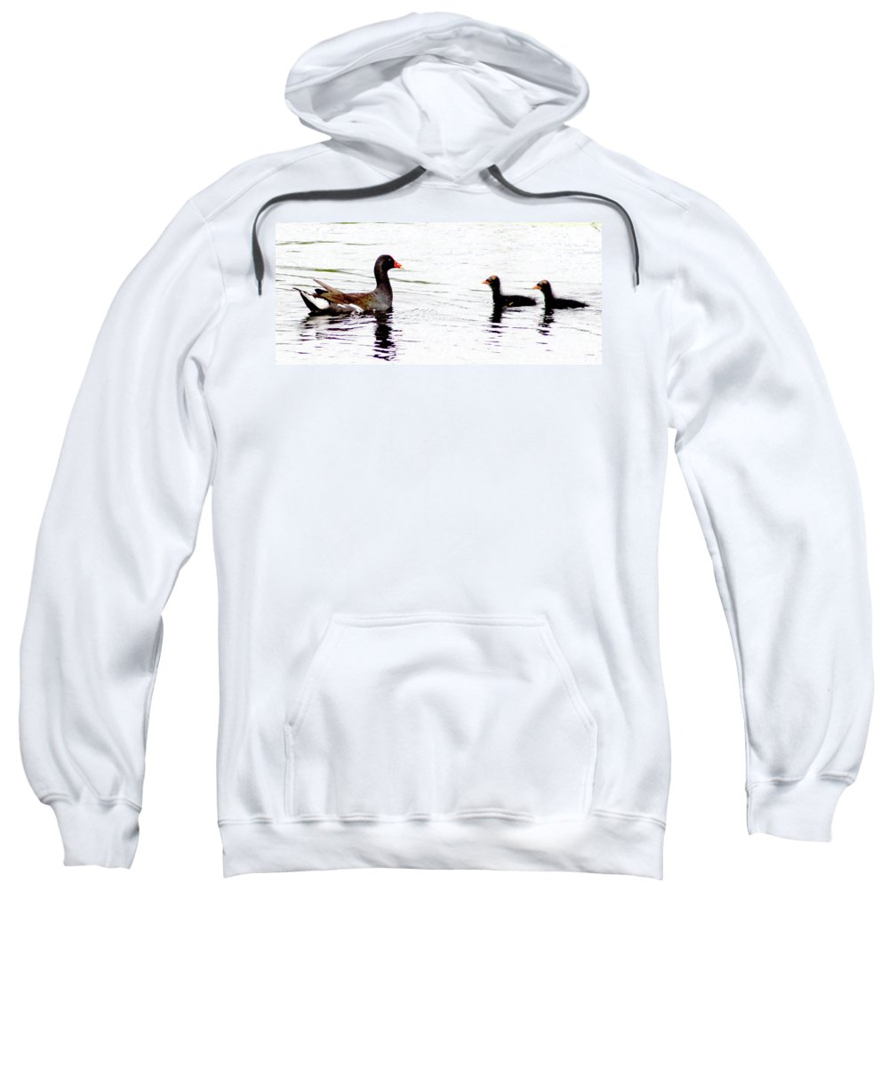 Common Gallinule Sweatshirt featuring the photograph Gallinule Family by Norman Johnson