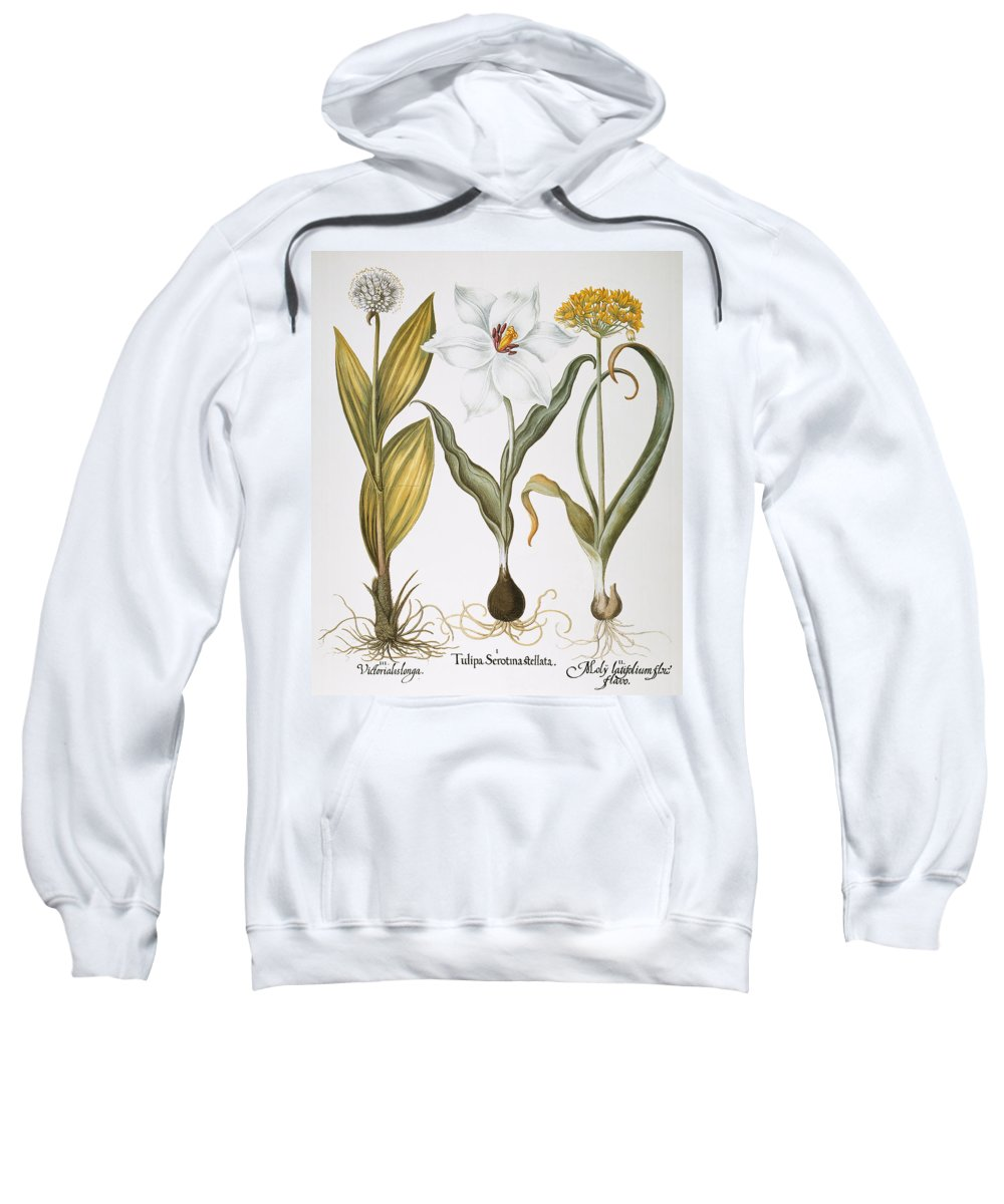 1613 Sweatshirt featuring the photograph Garlic, 1613 by Granger