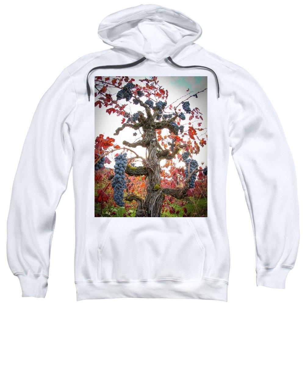 Old Vine Sweatshirt featuring the photograph General Cluster by Travis Elder